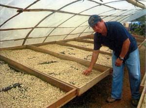 ペルー有機栽培コーヒー