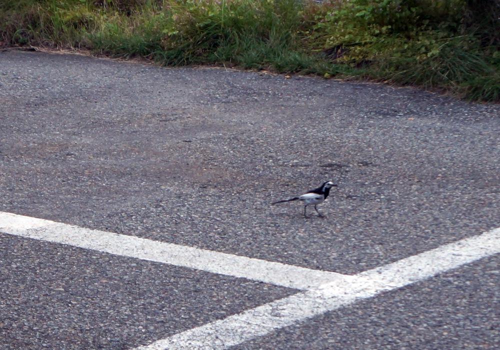 イーグルコーヒー高山 野鳥